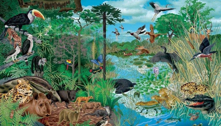 Ecosistema Scopriamo Cos è E Quanti Ce Ne Sono Sulla Terra