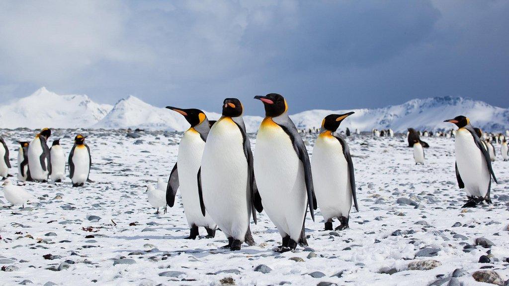 Célèbre Il Pinguino: l'uccello socievole e buffo che rischia l'estinzione VO08