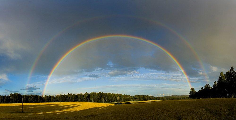Svelata la magia dell 39 arcobaleno perch vediamo i sette - Immagini di gufi arcobaleno ...