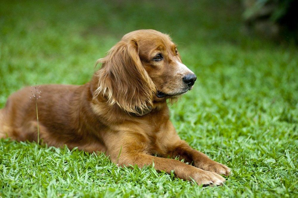 Razze di cani semplicemente irresistibili taglia piccola media e