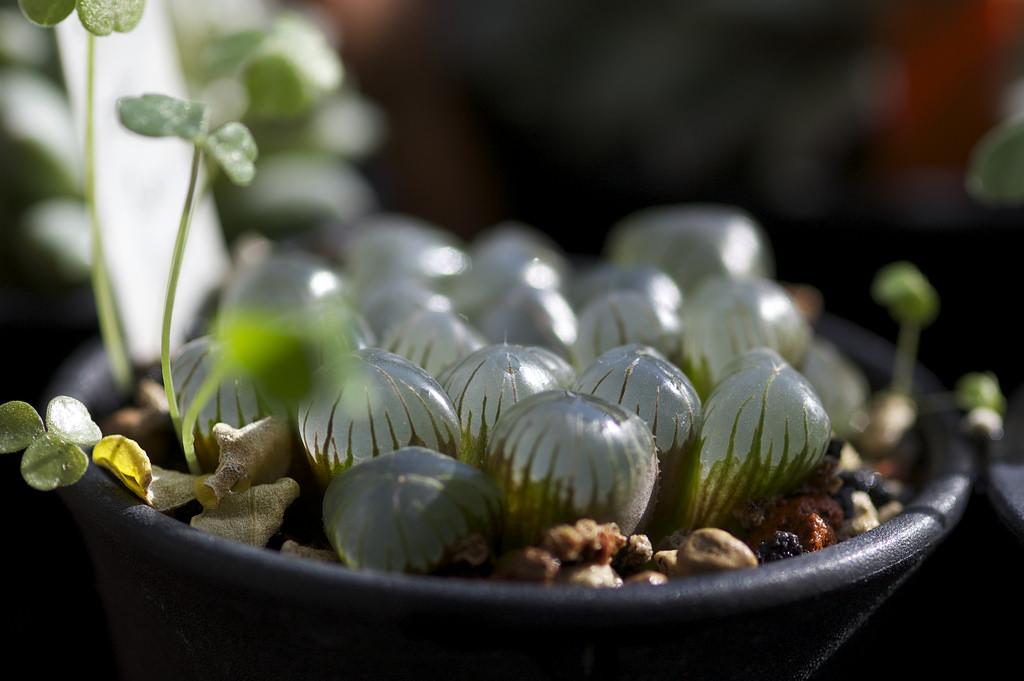 piante strane 5 variet particolari da coltivare in italia