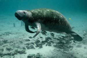 Mammiferi-marini