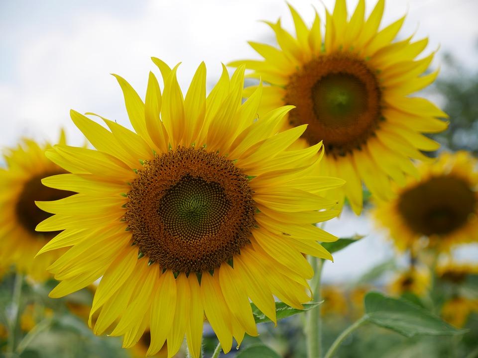 Fiori Gialli Di Campo Primaverili.Fiori Gialli 5 Varieta Semplici Da Coltivare Per Un Giardino