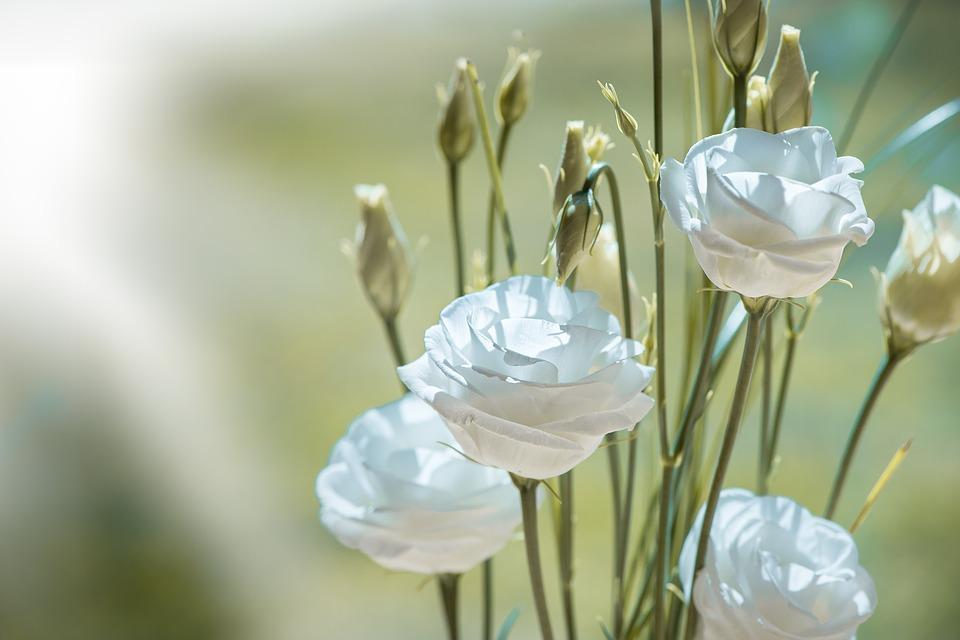 Fiori Bianchi Simili A Rose.Fiori Bianchi Simili Alle Rose
