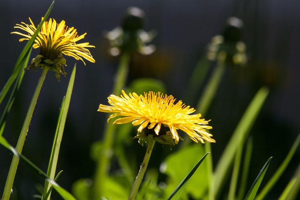 Fiori Gialli Primaverili Nomi.Fiori Gialli 5 Varieta Semplici Da Coltivare Per Un Giardino