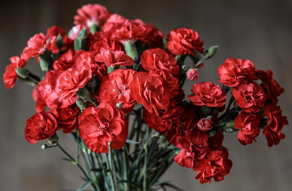 Fiori Bianchi Simili Alle Rose.Fiori Rossi Le 4 Varieta Piu Belle E Semplici Da Coltivare