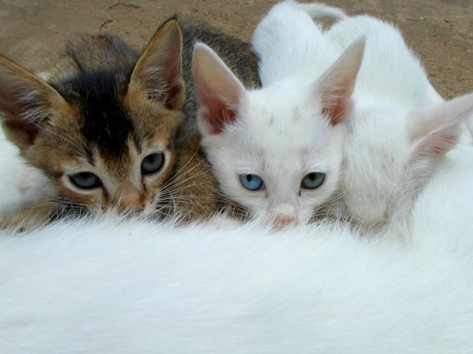 Svezzamento Gattini Quando Inizia Quanto Dura E Come Comportarsi