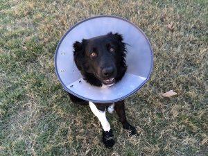 Sterilizzazione-cane