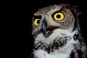 Animali-notturni-occhi