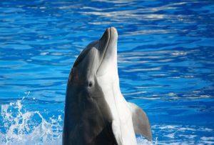 Delfino-aspetto