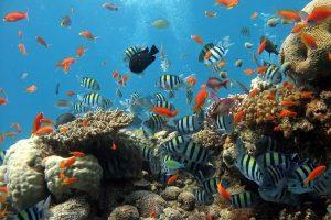 Habitat-barriera-corallina