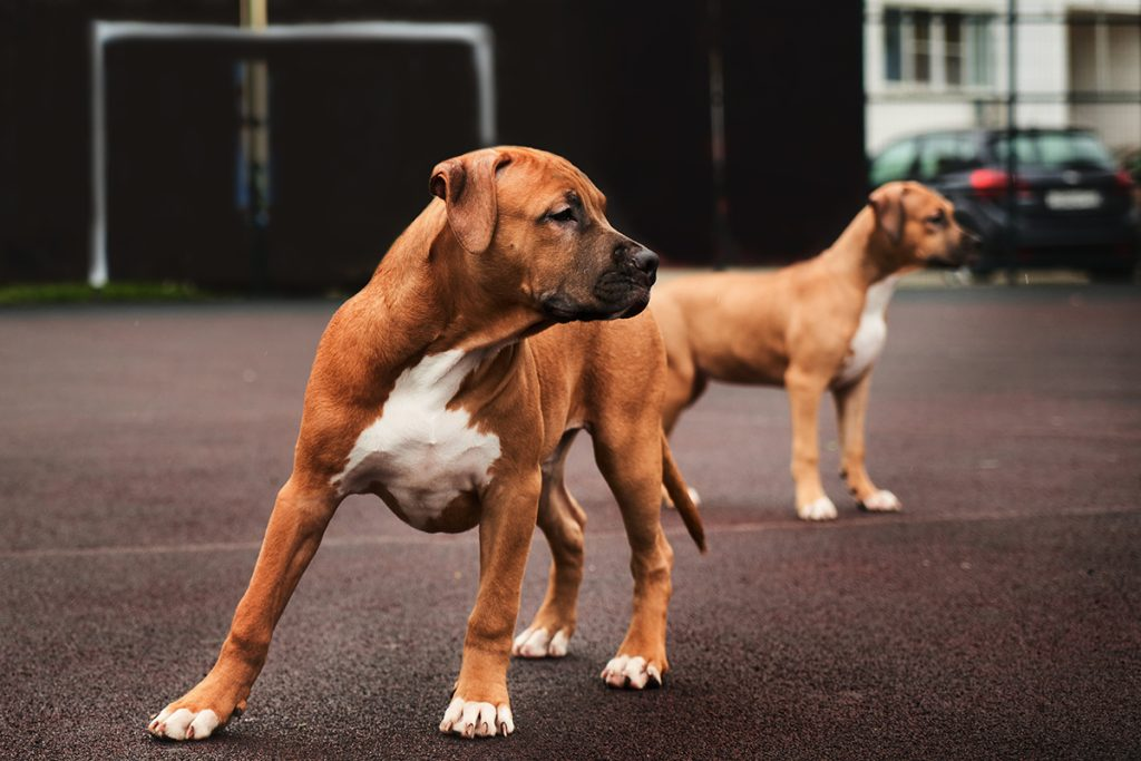 Bambina salvata da un cane: veterinaria eroe
